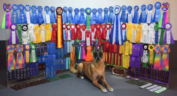4-19-15 Ribbons so far-no titles sm