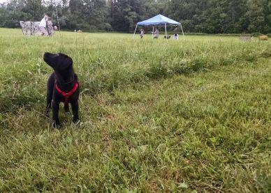 6-5-16 Hunt test field Sm