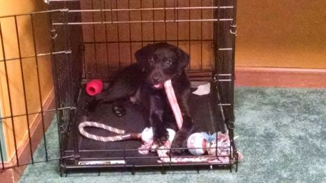 6-7-16 chilling in his crate Sm