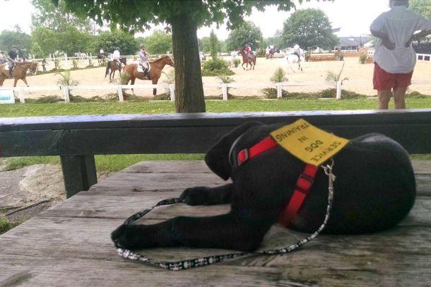 6-7-16 KY horse park Sm