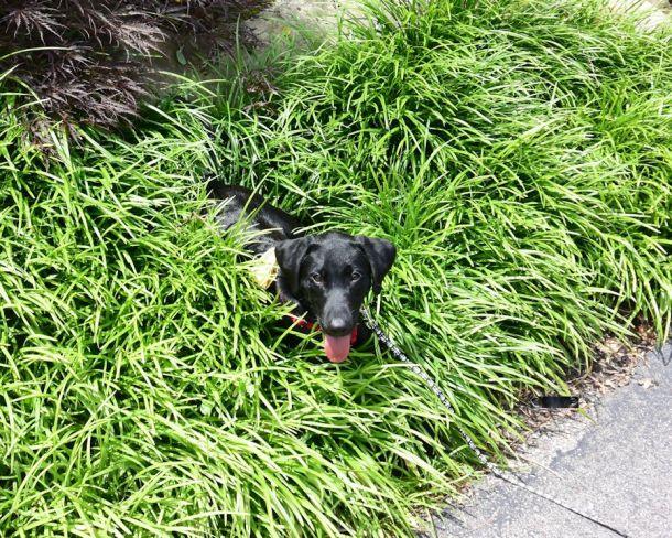 7-17-16 Cool grass SM