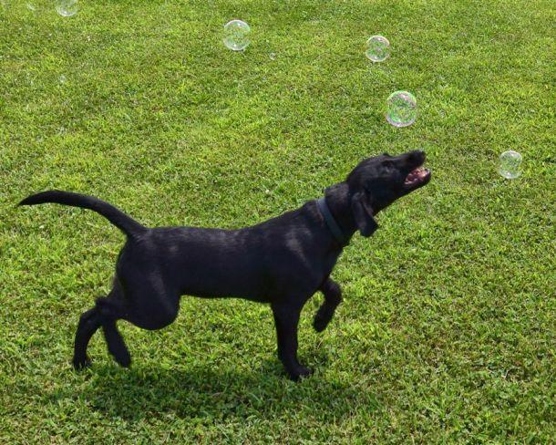 7-19-16 Bubbles 1 Sm
