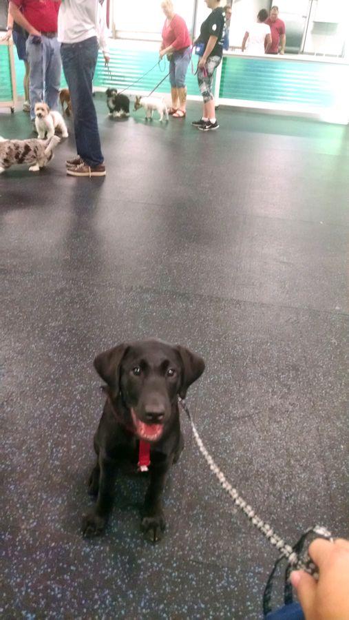7-7-16 puppy class Sm