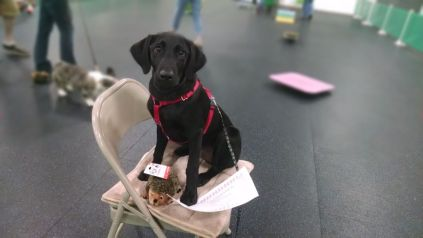 8-10-16 Graduated puppy class Sm
