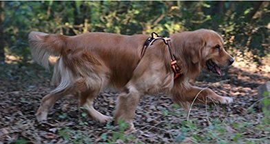 Chai's Choice Front Range Dog Harness