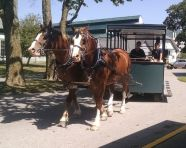 9-4-16-carriage-ride1-sm