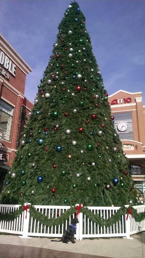12-20-16-newport-tree-sm