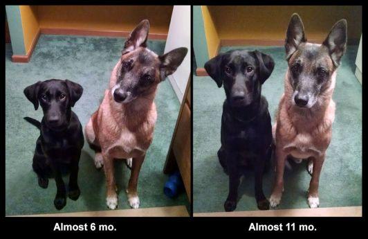 2-15-17-comparison-sm