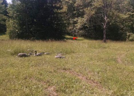 6-10-17 duck location sm